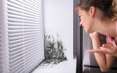 Prevent Mold Growth in Your Home